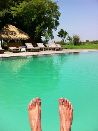 Kumudara Hotel Bagan : Put your feet up by the pool