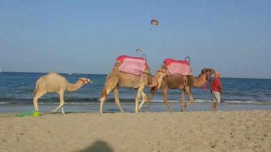 Hotel Djerba Haroun: la spiaggia