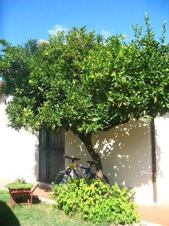 Il giardino di Ines B&B : L'Arancio