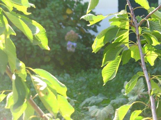 Il giardino di Ines B&B : Il piccolo Ciliegio