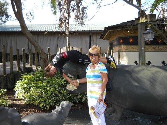 Chimpanzee Picture Of Busch Gardens Tampa Tampa Tripadvisor