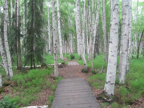 Creamer's Field Migratory Waterfowl Refuge : birch trees and path
