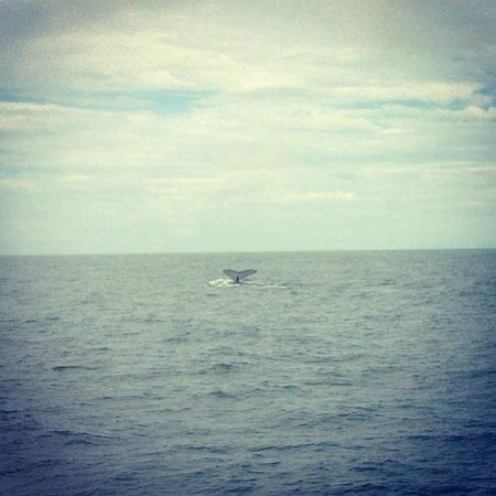 Dos Palmas Beach Cabinas: See whales from our back porch!