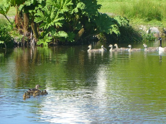 Pollaughan Holiday Cottages: Pollaughan Wildlife lake