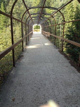 Kootenai Falls Swinging Bridge: Walkway over the railroad tracks