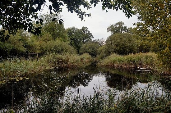 Wicken Fen National Nature Reserve: View from hide of old clay pit pond
