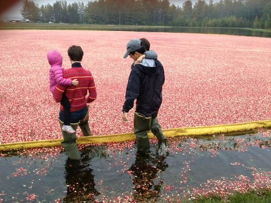 Cranberry Discovery Center: Wading into the sea of cranberries