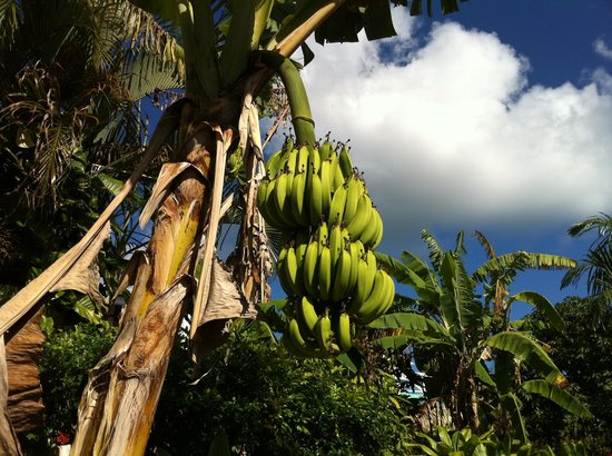 Las Mariposas: Banane