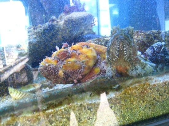 Aquarium Laguna di Nora