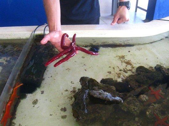 Aquarium Laguna di Nora: nora