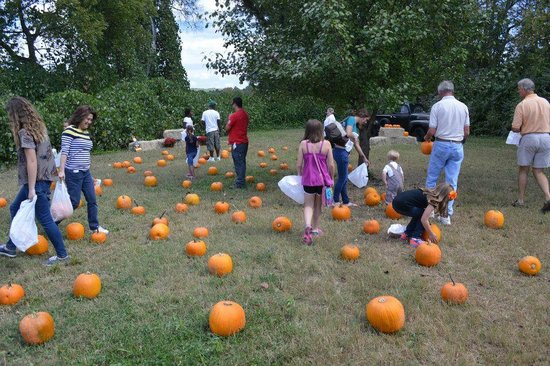 North Alabama Railroad Museum : Pumpkin patch