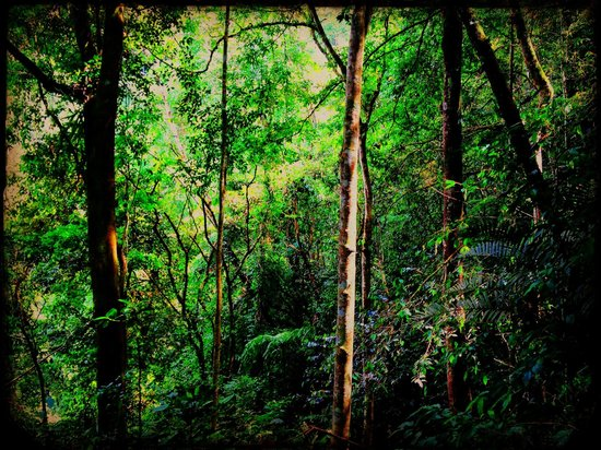 The Forest at Rancho Naturalista