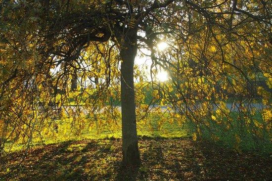 Hatanpaa Arboretum: Autumn 2013