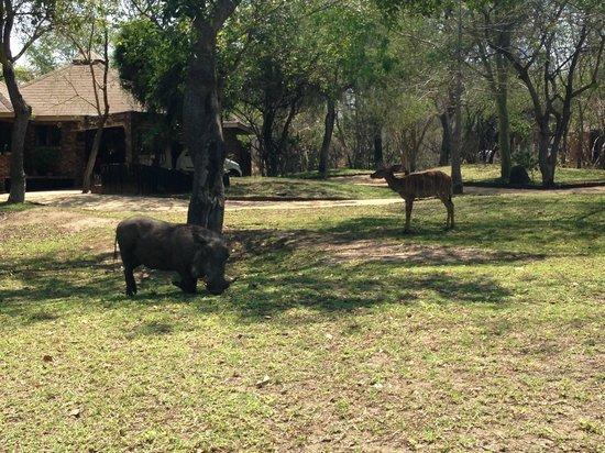 Idube Game Reserve Lodge: Patio