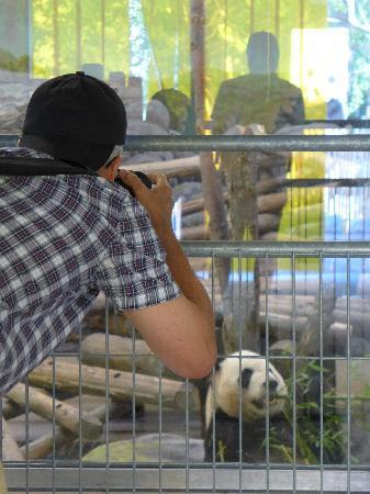 Toronto Zoo: Panda photo opp