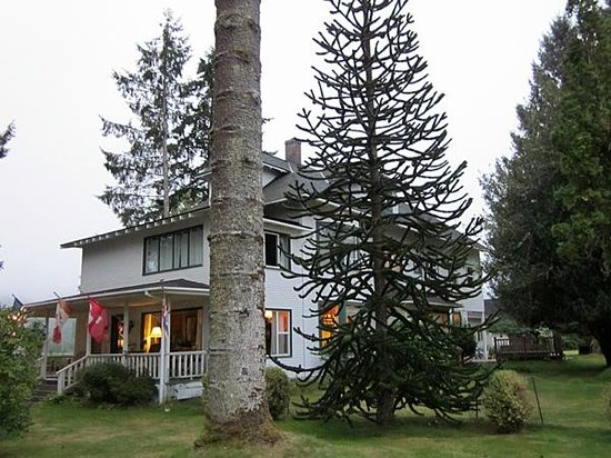 Miller Tree Inn Bed & Breakfast: That's a large Monkey Puzzle Tree!