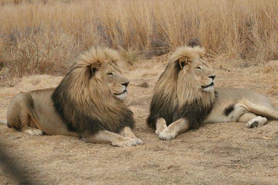 Lionsrock Lodge : Twee broers