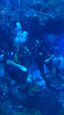 Epcot Divequest: Dive Buddies!