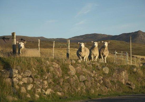 No. 192 Bed & Breakfast : sheep everywhere