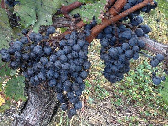 Kontokosta Winery: Low hanging fruit?