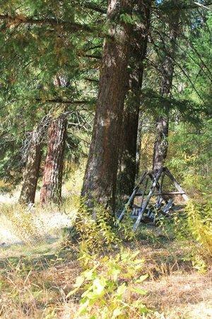 Mountain Home Lodge: Swinging chair