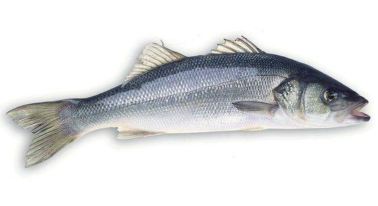 Mio Gusto : sea bass