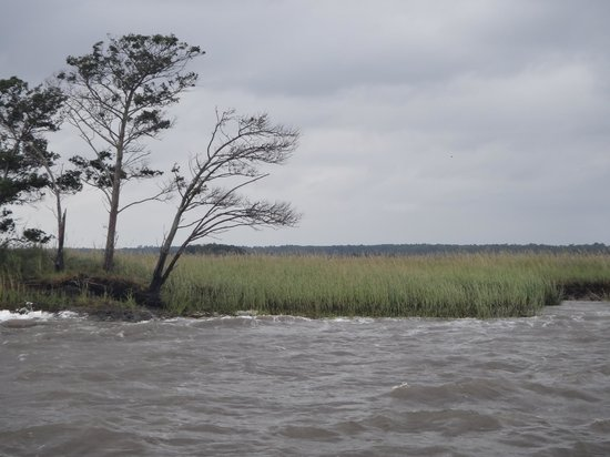 Cap'n Rod's Lowcountry Plantation Tours: old rice plantations
