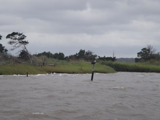 Cap'n Rod's Lowcountry Plantation Tours: we saw tons of bald eagles!  more than my parents saw in a week in Alaska