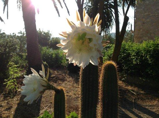 Agriturismo Villa Padura: Fiore di cactus
