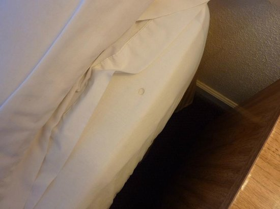 Knights Inn Grand Blanc : Cigarette burns in the bed sheets