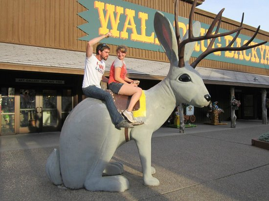 Wall Drug: Riding the jacalope