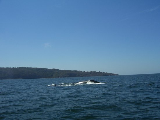 Decameron Los Cocos: 2 whales