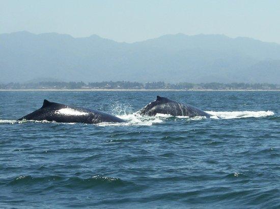 Decameron Los Cocos: Biiig whale