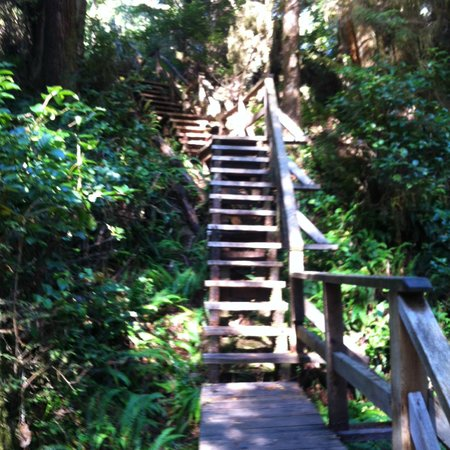 Tofino Rainforest Trail