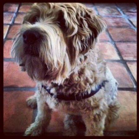 La Maison Hotel: Our furry friend Murphy