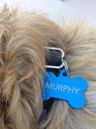 La Maison Hotel: We clearly adored Murphy