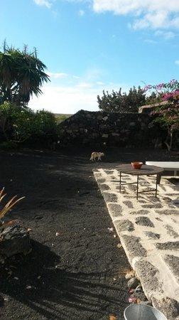 Caserio de Mozaga: Jardin