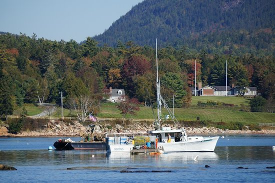 Bar Harbor Whale Watch Company: lobster boat
