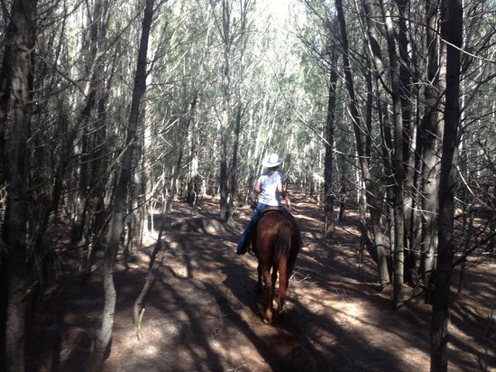 The Stables at Koele: forest part of the trail