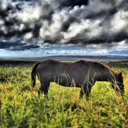 The Stables at Koele: horse in pasture
