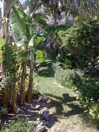 Key West Garden Club: Walking Path