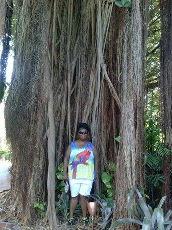 Key West Garden Club: I cant climb it :( ..lol