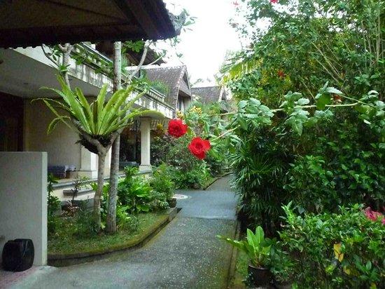 Abangan Bungalow: Roses along the path