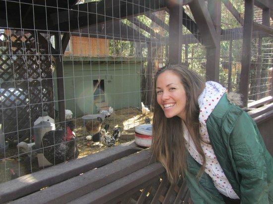 Strawberry Creek Inn: Chicken fun!