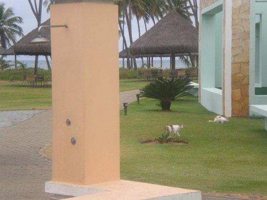 Iberostar Praia do Forte: Gatos comiendo en los alrededores del salon Maresias, que luego entran