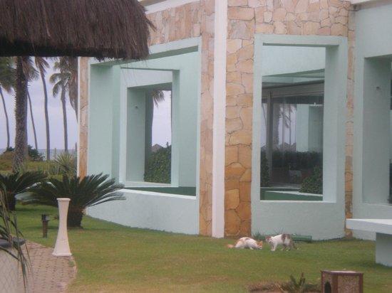 Iberostar Praia do Forte: Gato que entra al comedor Maresias.-