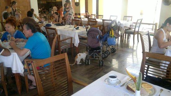 Iberostar Praia do Forte: Gato en plena cena entre las personas y cerca de niños pequeños