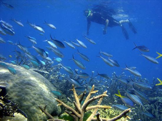 Oak Beach, Australia: Access to Great Barrier Reef