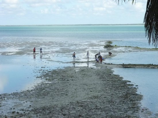 Otintaai Hotel: Local villagers looking for crabs at low tide