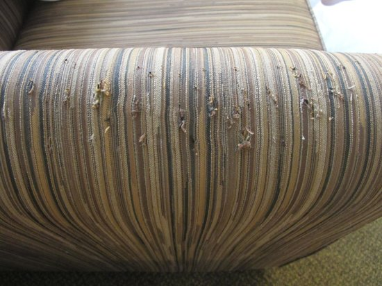 Holiday Inn Rapid City - Rushmore Plaza: Clawed up sofa